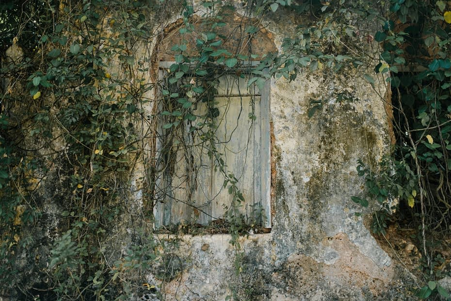 window in stone building in forest