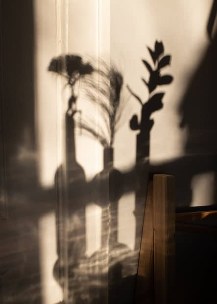 shadows of plants in vases on wall